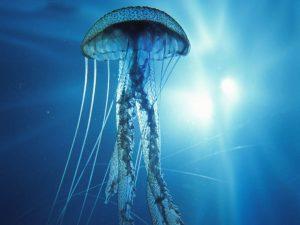 pag20 medusa2