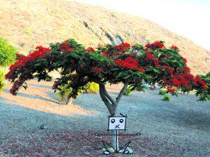pag13_la pianta di fuoco