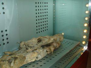 pag22_1280px-Momia_guanche_museo_santa_cruz_27-07