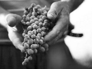 pag08_mani-viticoltore-corbera-53078e76e4549