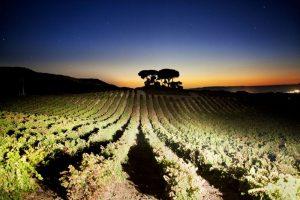 pag21_vega-sicilia-82