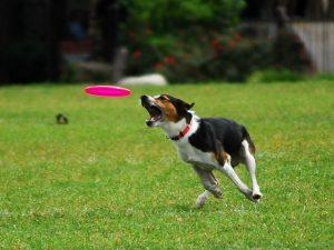 Foto da dogsportpups.blogspot.com