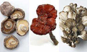 pag10_Mushroom-composite--012