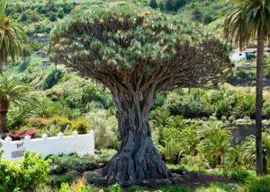 Foto da euspanica.com
