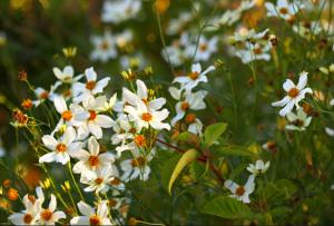 immagine tratta da botanyphoto.botanicalgarden.ubc.ca