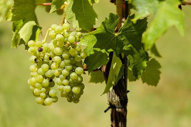 grapes-1611089_640